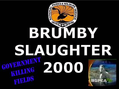 brumby-slaughter-banner