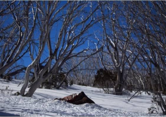 brumby-snow-2.2
